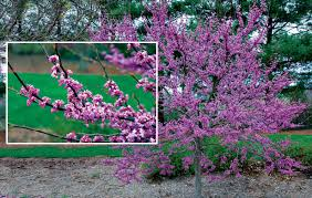 choosing small trees for a big impact state by state gardening