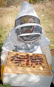 apiary u2014 apis restaurant and apiary