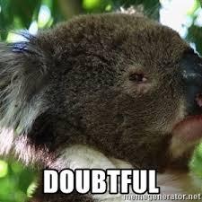 Koala Meme Generator - skeptical koala meme generator