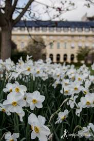 spring garden family restaurant park it in paris jardin du palais royal u2014 simply sara travel