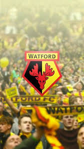 Blind Stupid And Desperate Watford Fc On