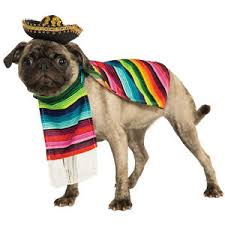 mexican sarape pet costume sombrero dog poncho mariachi puppy taco