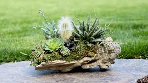 Plants And Planters by Rock Planter W Succulents Air Plants U0026 Cacti Youtube