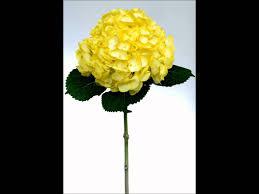 Hydrangea Wedding Hydrangeas Wedding Flowers Hydrangea Centerpieces Youtube
