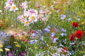 a naturalistic border idea with perennials and grasses