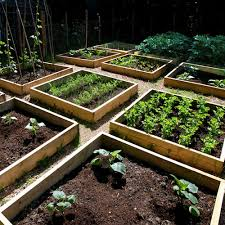 Garden Allotment Ideas Container Gardening Growing Vegetables In Planters