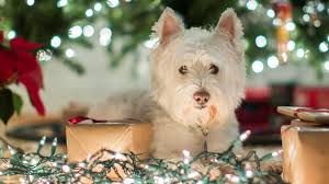 origin of christmas lights 6 tips to get your christmas lights right origin energy