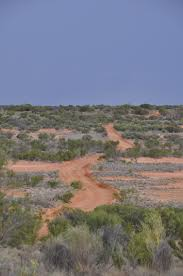 native australian desert plants tiny desert mice could help save australia u0027s grasslands from