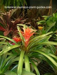 popular flowering house plants beautiful blooming houseplants