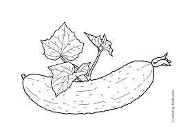cucumber with leaves vegetables coloring pages for kids printable