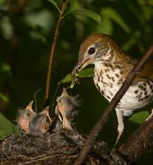 native plants for wildlife habitat and conservation landscaping plants for birds plant it and they will come ecological