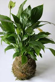 shining tropical house plants names identification of common