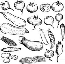 drawn vegetables veggie pencil and in color drawn vegetables veggie
