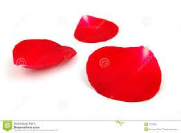 Rose Petals Red Rose Petals Stock Photo Image 1102030