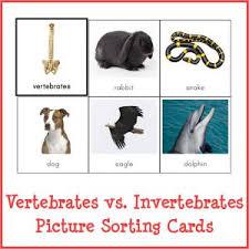vertebrates vs invertebrates picture sorting cards montessori