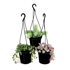 3 5 in assorted succulent hanging basket 3 pack 0881006 the