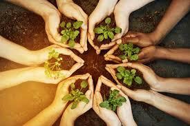 companion planting made easy organic gardening mother earth news