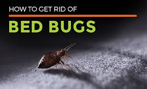 How To Get Rid Of Bed Bugs At Home Bed Bug Control U0026 Facts All About Bed Bugs Habitat