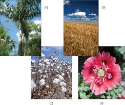 Tropical Plant Biology - chapter 14 diversity of plants biology open course framework