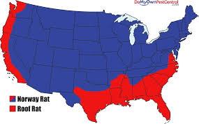 Midwest United States Map by All About Rats Types Of Rats Loctaions And History Rat Facts