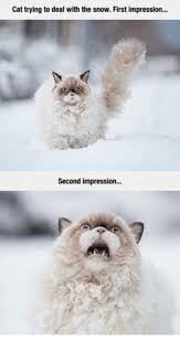 Grumpy Cat Snow Meme - cat trying to deal with the snow first impression second impression