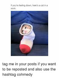 Feeling Down Meme - if you re feeling down here s a cat in a sock tag me in your posts
