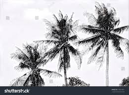 tropical scene palm trees on sky stock illustration 573621091