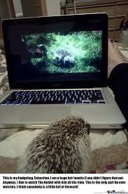 Hedgehog Meme - sebastian the hedgehog by hayley95 meme center