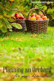 Best Fruit Trees For North Carolina - 210 best garden fruits u0026 berries images on pinterest berries