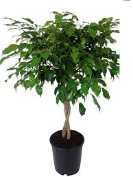 air purifying plants florastore