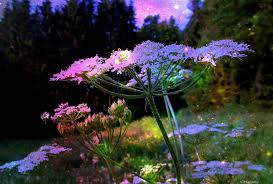 magical night wallpapers flowers romantic stars fairytale purple moon meadow magical