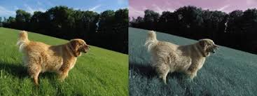 Are All Dogs Colour Blind Can All Dog See In 2d Or 3d How Many Color Do Dogs See Quora