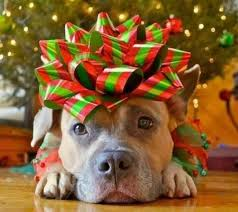 dog christmas christmas from a dog s perspective the hi