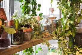 In House Plant Airbnb U201coutside In U201d House Springs To Life In The Heart Of London U0027s