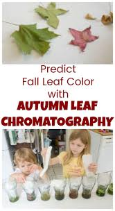 kids in mind 211 best kids in mind fall images on pinterest