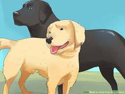 belgian shepherd how to train how to train your dog to hunt 11 steps with pictures wikihow