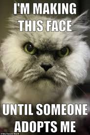 Angry Cat No Meme - no need to be cross anymore angry cat finds a new home grumpy cat