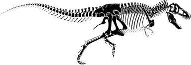 t rex skeleton cool crafty stuff pinterest tattoo dinosaur