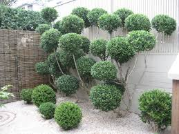 Topiary Balls With Flowers - cloud pruning