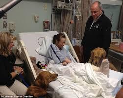 Comfort Golden Boston Bomb Victims Meet The Golden Retrievers Who Helped Comfort