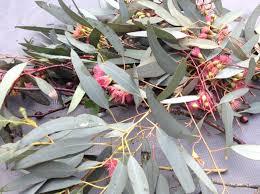 melbourne native plants native plants carlseapatch u0027s weblog