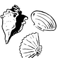 pair fly specked cerith seashell coloring pair fly