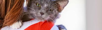 adopt a family for thanksgiving adopt a pet pet adoptions arizona humane society