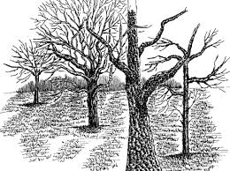 how to draw tree branches and twigs in pen and ink my pen and