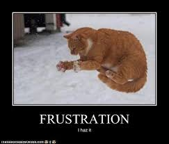 Frustrated Meme - animal capshunz frustration funny animal pictures with captions