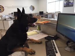 forest service help desk forest service computer help desk forest lake police dog dies after