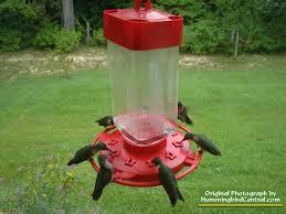 Hummingbird On A Flower - hummingbird feeders glass feeders plastic hummer feeders and how
