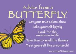 advice from a butterfly jumbo magnet your true nature inc