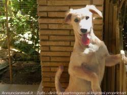 cani in cerca di casa cani taglia piccola in regalo a genzano di roma rm