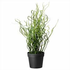 gardening ideas potted plant we love tropical indoor plants u home